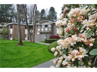 """Photo 1: 6 5565 OAK Street in Vancouver: Shaughnessy Condo for sale in """"SHAWNOAKS"""" (Vancouver West)  : MLS®# V946149"""