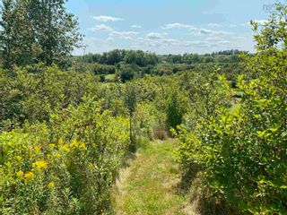 Photo 14: Shore Road in Merigomish: 108-Rural Pictou County Vacant Land for sale (Northern Region)  : MLS®# 202120405