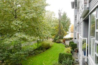 """Photo 14: 211 1880 E KENT AVENUE SOUTH in Vancouver: Fraserview VE Condo for sale in """"PILOT HOUSE"""" (Vancouver East)  : MLS®# R2223956"""