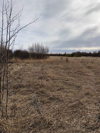 Photo 5: 79.84 AC RR225 north of Twp 572: Rural Sturgeon County Rural Land/Vacant Lot for sale : MLS®# E4238538