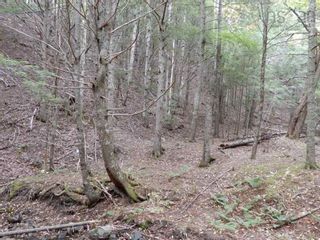 Photo 11: Tanner Hill Road in Limerock: 108-Rural Pictou County Vacant Land for sale (Northern Region)  : MLS®# 202121301
