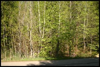 Photo 21: 21 6500 Southwest 15 Avenue in Salmon Arm: Panorama Ranch Vacant Land for sale : MLS®# 10230290