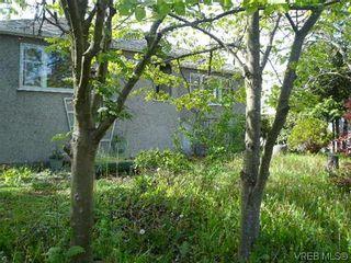 Photo 4: 1705 Haultain St in VICTORIA: Vi Jubilee House for sale (Victoria)  : MLS®# 605225