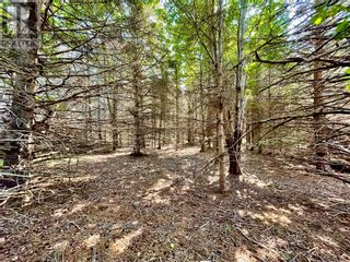 Photo 8: lot 10-1 Route 955 in Murray Corner: Vacant Land for sale : MLS®# M135241