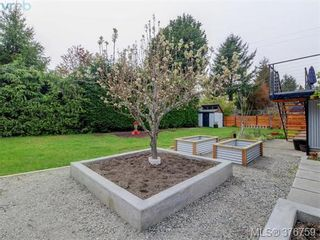 Photo 19: 4419 Chartwell Dr in VICTORIA: SE Gordon Head House for sale (Saanich East)  : MLS®# 756403