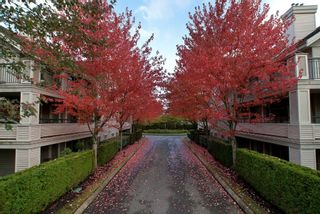 Photo 3: #115 22025 48th Ave in Langley: Murrayville Condo for sale : MLS®# F1316654