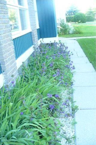 Photo 19: 143 TALLMAN ST in Winnipeg: Residential for sale (Canada)  : MLS®# 1013378