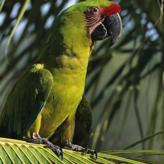 Photo 43: 144 Paraiso Escondido, Honduras: Out of Province_Alberta House for sale : MLS®# E4255080