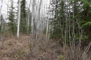 Photo 20: 5024 LAUGHLIN Road in Smithers: Smithers - Rural House for sale (Smithers And Area (Zone 54))  : MLS®# R2573882