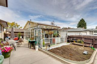 Photo 34: 147 Templevale Place NE in Calgary: Temple Detached for sale : MLS®# A1144568