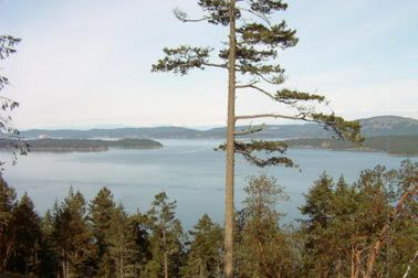 Main Photo: Lot 4 Meyer Road: Residential Detached for sale (Saltspring Island)  : MLS®# n/a