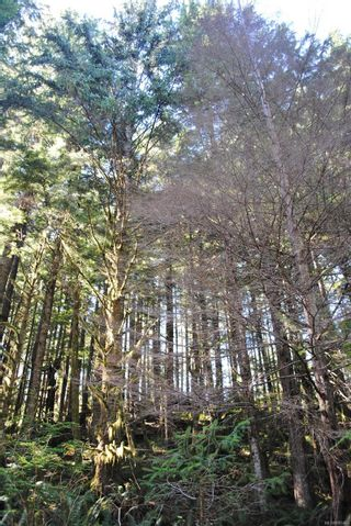 Photo 8: Lot 42 Sonora Island in : Isl Small Islands (Campbell River Area) Land for sale (Islands)  : MLS®# 885460
