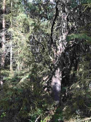 Photo 24: Pinebrook Block 1 Lot 2: Rural Thorhild County Rural Land/Vacant Lot for sale : MLS®# E4171871