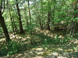 Photo 35: 400 MARY LAKE (GRYFFIN BLUFFS LANE) Lane in Port Sydney: Vacant Land for sale : MLS®# 40126538