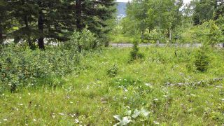 Photo 17: 437 WOODLAND Drive in Williams Lake: Williams Lake - City Land for sale (Williams Lake (Zone 27))  : MLS®# R2475217