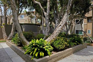 Photo 15: UNIVERSITY CITY Condo for sale : 1 bedrooms : 7595 Charmant Dr #703 in San Diego