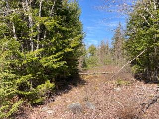 Photo 3: 65 Eaglet Lane in Musquodoboit Harbour: 35-Halifax County East Vacant Land for sale (Halifax-Dartmouth)  : MLS®# 202109854