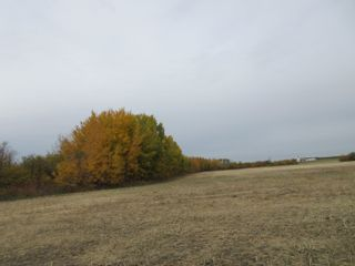 Photo 5: 55101 RR 270: Rural Sturgeon County Rural Land/Vacant Lot for sale : MLS®# E4265205