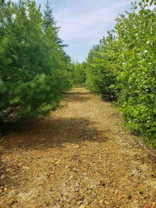 Photo 4: Lot 101 Dorey Mills Road in Clearland: 405-Lunenburg County Vacant Land for sale (South Shore)  : MLS®# 202119645