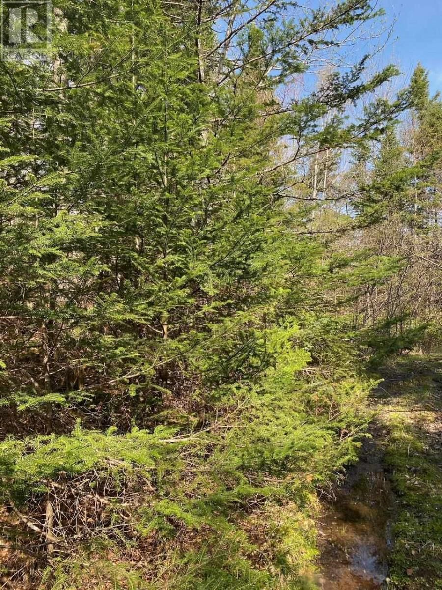 Main Photo: North River Road in North River: Vacant Land for sale : MLS®# 202112283