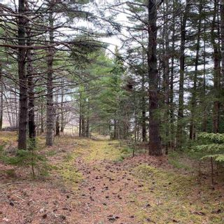 Photo 19: Vacant Land Highway 331 in West Lahave: 405-Lunenburg County Vacant Land for sale (South Shore)  : MLS®# 202111160