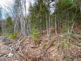 Photo 12: Lot 7 Lower Grant Road in Chester Basin: 405-Lunenburg County Vacant Land for sale (South Shore)  : MLS®# 202110749