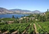 Photo 11: 4525 VALLEYVIEW ROAD in PENTICTON: Agriculture for sale : MLS®# 212129 / 212130