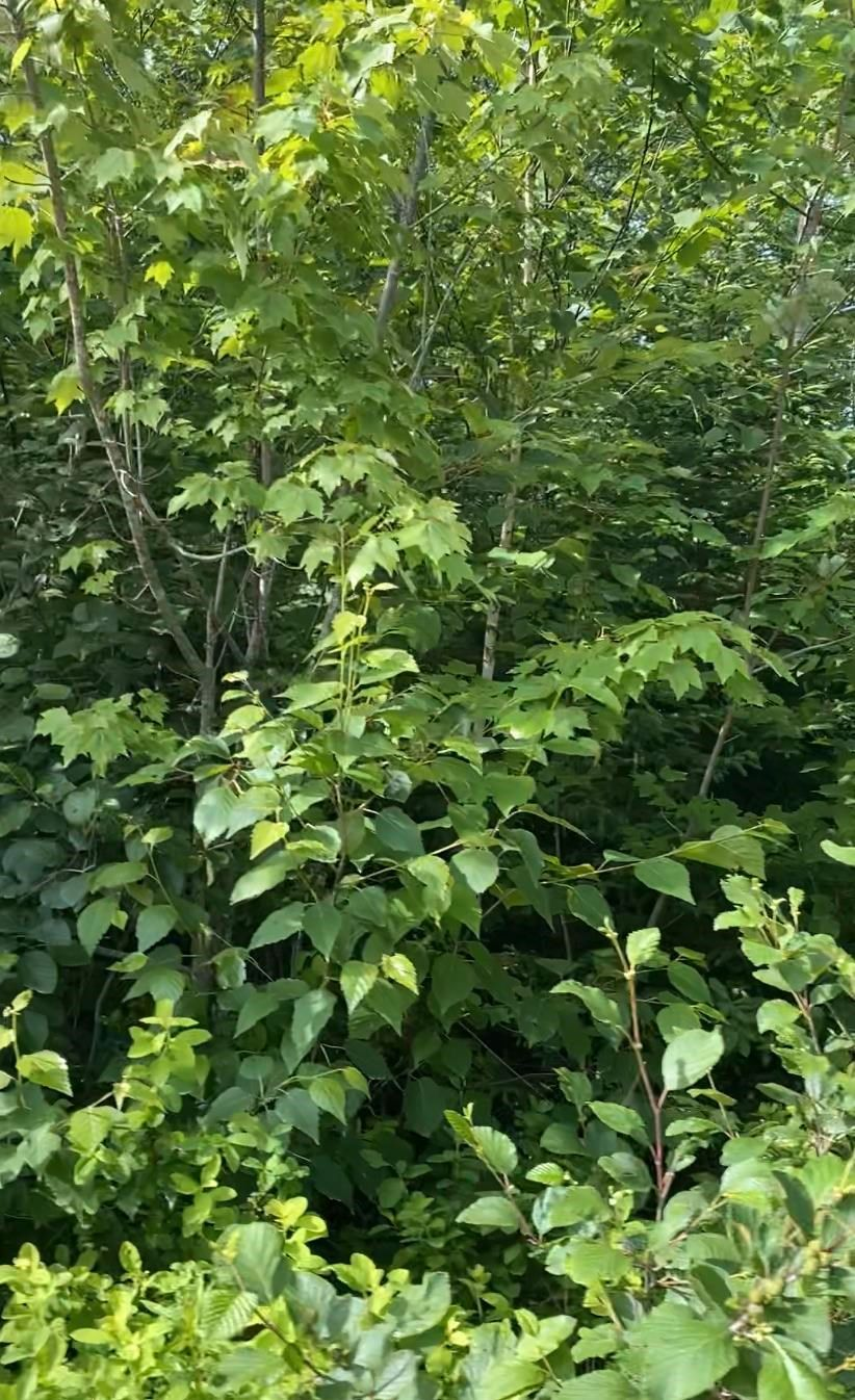 Photo 4: Photos: Lot 5 Mersey Road in East River: 405-Lunenburg County Vacant Land for sale (South Shore)  : MLS®# 202117014