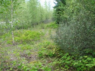 Photo 4: Lot 22 Ridge Road: Eagle Bay Land Only for sale (Shuswap)  : MLS®# 10167444