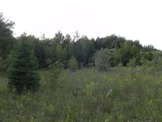 Photo 5: 22084 PT 2 PARCEL, WHITMORE RD in FORT FRANCES: Vacant Land for sale : MLS®# TB212402