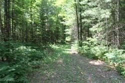 Photo 10: 5238 County Rd 121 Road in Minden Hills: Property for sale : MLS®# X4678347