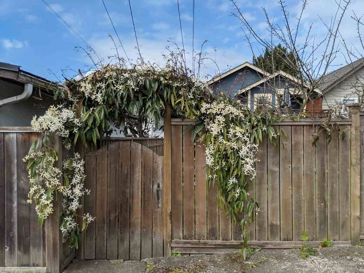 Photo 28: Photos: 2566 DUNDAS Street in Vancouver: Hastings House for sale (Vancouver East)  : MLS®# R2563281