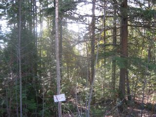 Photo 2: Lot 84 Anglemont  Way in Anglemont: Land Only for sale : MLS®# 10001830
