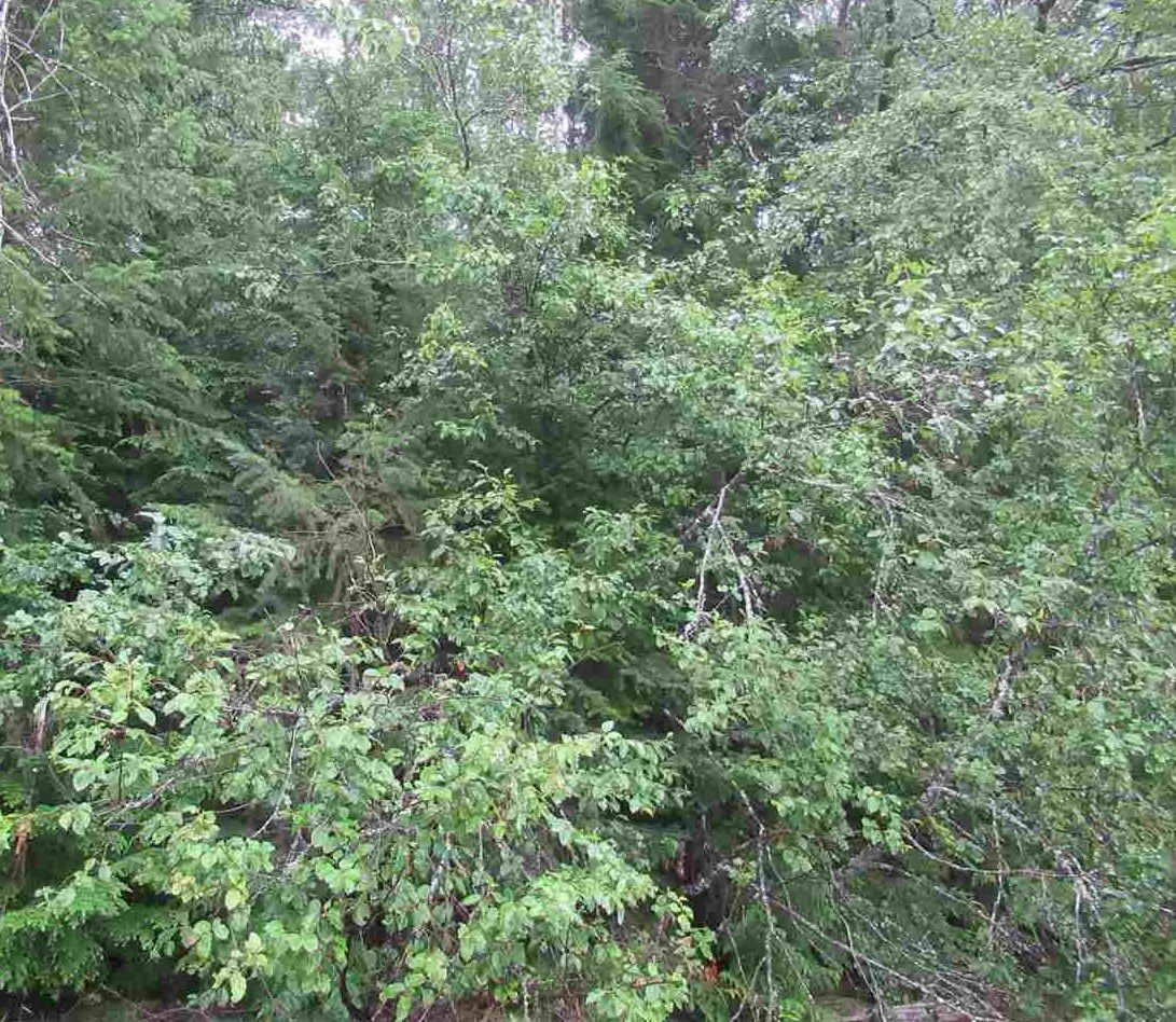 """Photo 12: Photos: LOT 3 HAGGENS POINT Road: Horsefly Land for sale in """"QUESNEL LAKE"""" (Williams Lake (Zone 27))  : MLS®# R2398733"""