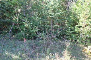 Photo 9: Lt 48 Centennial Park Road in Kawartha Lakes: Rural Eldon Property for sale : MLS®# X5380435