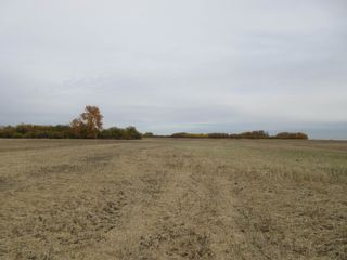 Photo 7: 55101 RR 270: Rural Sturgeon County Rural Land/Vacant Lot for sale : MLS®# E4265205