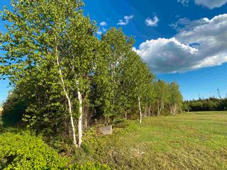 Photo 7: 16 acres Caribou Island Road in Caribou Island: 108-Rural Pictou County Vacant Land for sale (Northern Region)  : MLS®# 202104068