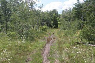 Photo 31: Lt 12 N Doyle Road in Kawartha Lakes: Rural Bexley House (1 1/2 Storey) for sale : MLS®# X5357700