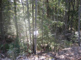 Photo 6: Lot 84 Anglemont  Way in Anglemont: Land Only for sale : MLS®# 10001830