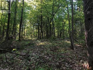 Photo 23: N/A RANEY Road E in Sundridge: Vacant Land for sale : MLS®# 40129602