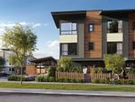 """Main Photo: 87 20150 81 Avenue in Langley: Willoughby Heights Townhouse for sale in """"Verge"""" : MLS®# R2562331"""