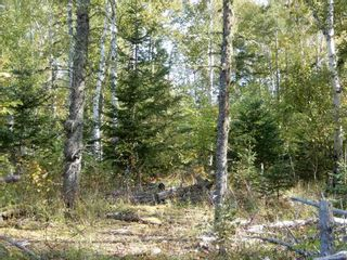 Photo 1: Tanner Hill Road in Limerock: 108-Rural Pictou County Vacant Land for sale (Northern Region)  : MLS®# 202121301