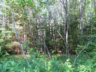 Photo 5: 236 Highway Highway in Kennetcook: 105-East Hants/Colchester West Vacant Land for sale (Halifax-Dartmouth)  : MLS®# 202116831