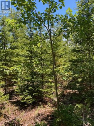 Photo 2: Lot Hirtle Road in Voglers Cove: Vacant Land for sale : MLS®# 202116540