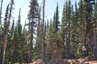 """Photo 12: 210 ALPINE Way in Smithers: Smithers - Rural Land for sale in """"Hudson Bay Mountain Estates"""" (Smithers And Area (Zone 54))  : MLS®# R2453895"""