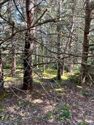 Photo 6: 1373 West Sable Road in Sable River: 407-Shelburne County Vacant Land for sale (South Shore)  : MLS®# 202122222