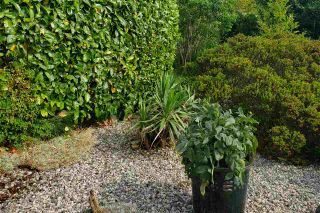 Photo 12: 6376 MARMOT Road in Sechelt: Sechelt District House for sale (Sunshine Coast)  : MLS®# R2525039