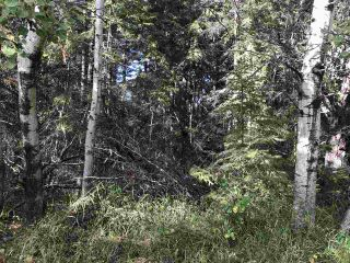 Photo 7: Pinebrook Block 1 Lot 2: Rural Thorhild County Rural Land/Vacant Lot for sale : MLS®# E4171871
