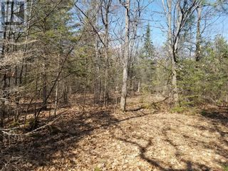 Photo 5: 250 Jules Lane in Mindemoya: Vacant Land for sale : MLS®# 2094891