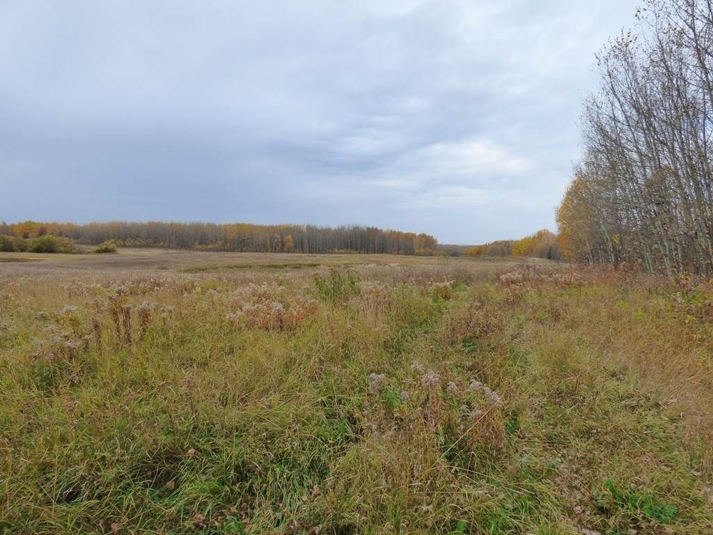 Photo 12: Photos: N1/2 SE19-57-1-W5: Rural Barrhead County Rural Land/Vacant Lot for sale : MLS®# E4217154